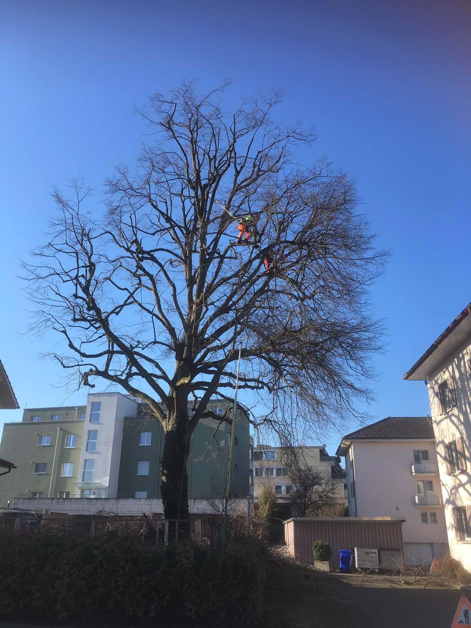 Baumpflege Proforst